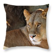 Lioness 3 Throw Pillow