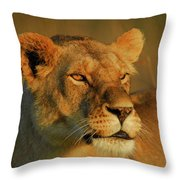Lioness At Maasai Sunet Throw Pillow