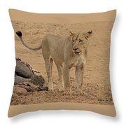 Lioness At The Kill Throw Pillow