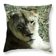 Lioness Peering Throw Pillow