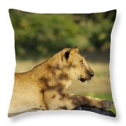 Lioness Pose Throw Pillow