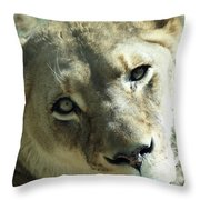Lioness Up Close Throw Pillow