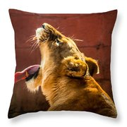 Lioness Yawn Throw Pillow