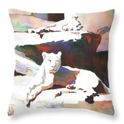 Lionesses At Zoo Throw Pillow