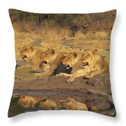 Lionesses Throw Pillow