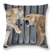 Lioness's Playing 1 Throw Pillow