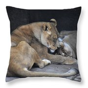 Lioness's Playing 2 Throw Pillow