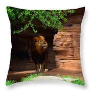 Lions And Tigers And...no Just A Lion Throw Pillow