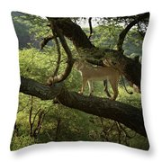 Lions Do Fly Throw Pillow