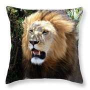 Lions Of The Masai Mara, Kenya Throw Pillow