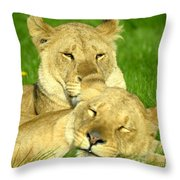 Lions Xvii Throw Pillow