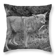 Listening Intently Closeup Black And White Throw Pillow