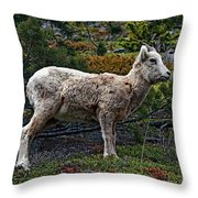 Litte Color Throw Pillow