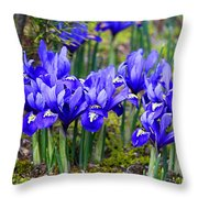Little Baby Blue Irises Throw Pillow