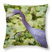 Little Blue At De Leon Springs Throw Pillow