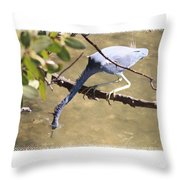 Little Blue Heron Going For Fish With Framing Throw Pillow