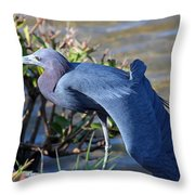 Little Blue Heron Sunbathing Throw Pillow