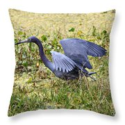 Little Blue Heron Walking In The Swamp Throw Pillow