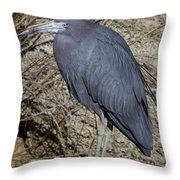 Little Blue In Ormond Throw Pillow