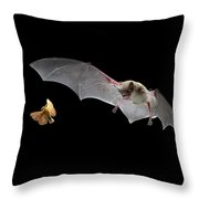 Little Brown Bat Hunting Moth Throw Pillow