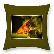 Little Brown Skipper Butterfly Throw Pillow