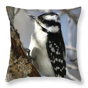 Little Downy Sweetness Throw Pillow