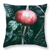 Little Lady Rosehip Throw Pillow