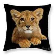 Little Lion Throw Pillow by Sergey Taran