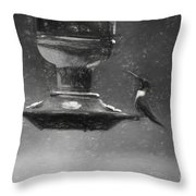 Little Male Hummingbird In Charcoal Throw Pillow