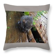 Little 'mighty Mouse' Throw Pillow