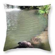 Little Otters At Jersey Zoo Throw Pillow