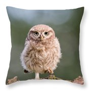 Little Owl Chick Throw Pillow