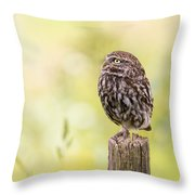 Little Owl Looking Up Throw Pillow