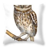 Little Owl Or Minerva's Owl Athene Noctua - Goddess Of Wisdom- Chouette Cheveche- Nationalpark Eifel Throw Pillow