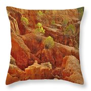Little Pine Trees Growing On The Valley Cliffs Throw Pillow