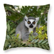 Little Ring-tailed Lemur Throw Pillow