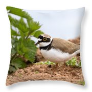 Little Ringed Plover Throw Pillow