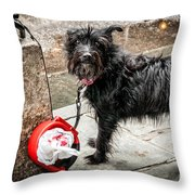 Little Wet Puppy In French Quarter Throw Pillow