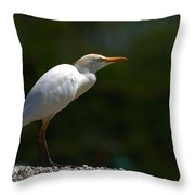 Little White Heron Throw Pillow