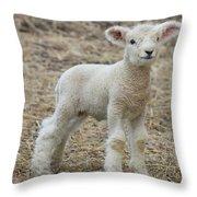 Little White Lamb Throw Pillow