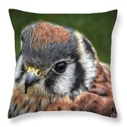 Little Wing Throw Pillow