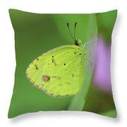 Little Yellow Butterfly Close-up Throw Pillow