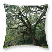 Live Oak 1 Throw Pillow