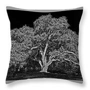 Live Oak At Hogan's Hole- Lion's Golf Course Throw Pillow