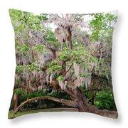 Live Oak Throw Pillow
