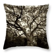 Live Oak Tree With Spanish Moss Throw Pillow