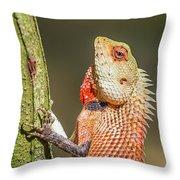 Lizard In Maldive Throw Pillow