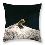 Lizard Rock Throw Pillow