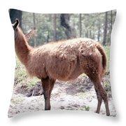 Llamalovely Throw Pillow