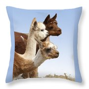 Llama's Three Throw Pillow